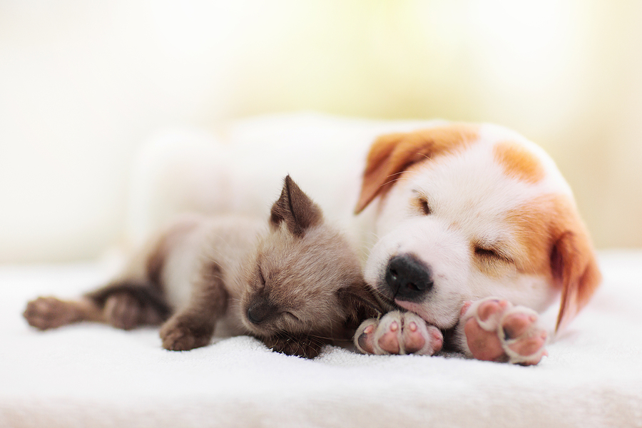 bigstock Cat And Dog Sleeping Together 383701730